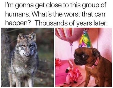 2019_09 21 DOG wolf