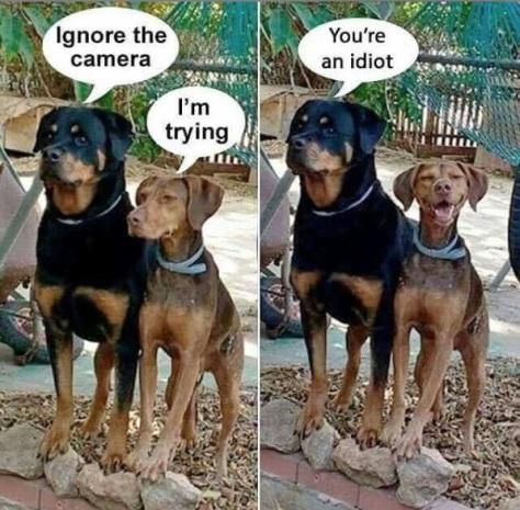 2019_09 21 DOGS ignore camera