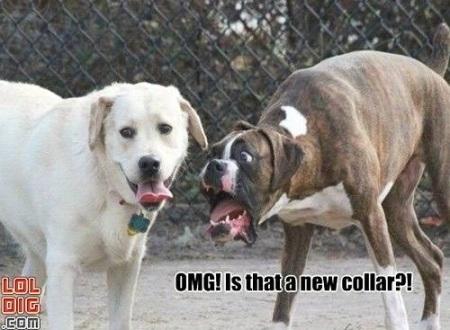 DOG new collar