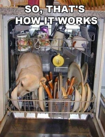DOG So that's how the dishwasher works
