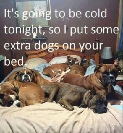 DOGS cuz its cold