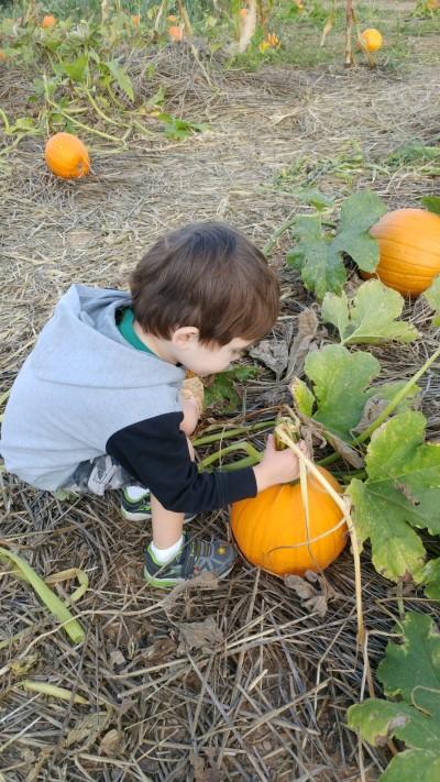2019_10 05 bootz pumpkin picking