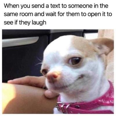 2019_10 10 DOG text