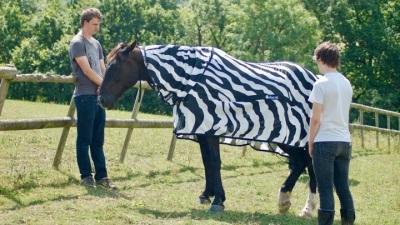 2019_10 18 zebras
