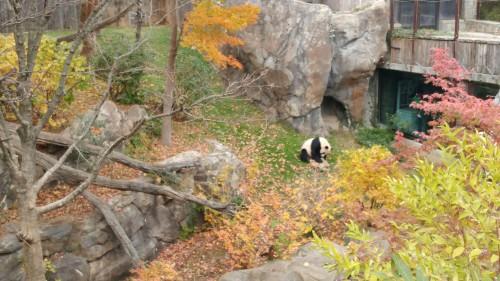 2019_11 09 Panda enclosure