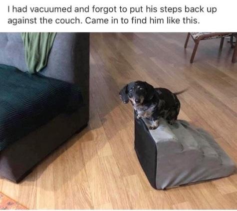 2019_11 16 dog stairs
