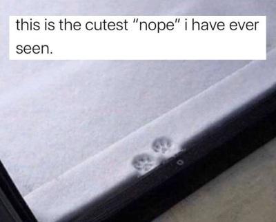 2019_11 19 CAT nope