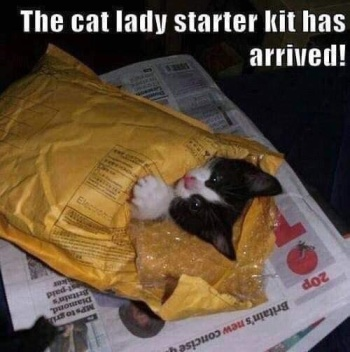 2019_11 20 cat lady starter kit