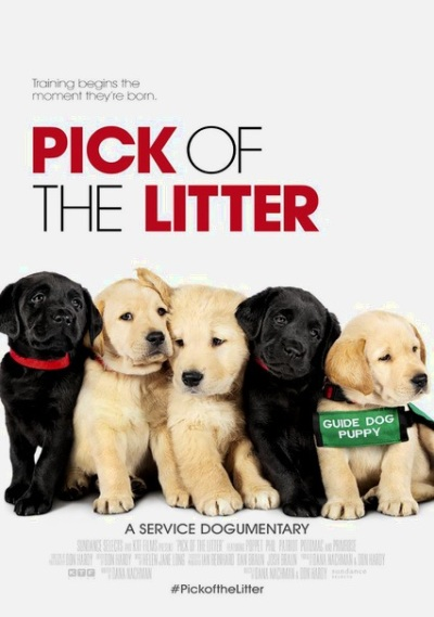 2019_11 25 pick of the litter