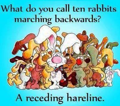 RABBITS marching backwards - sent to Rachel