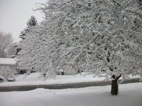 2019_12 02 snow c