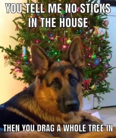 2019_12 08 DOG no sticks Christmas