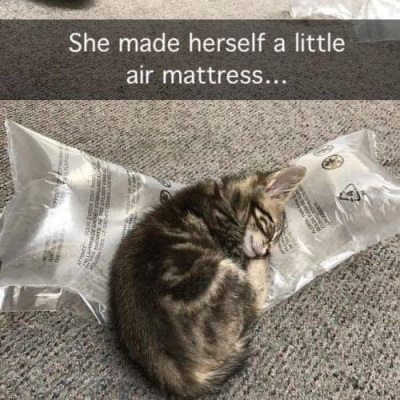 2019_12 11 cat air mattress