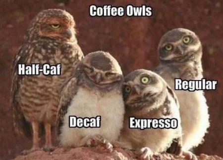 2019_12 14 COFFEE owls