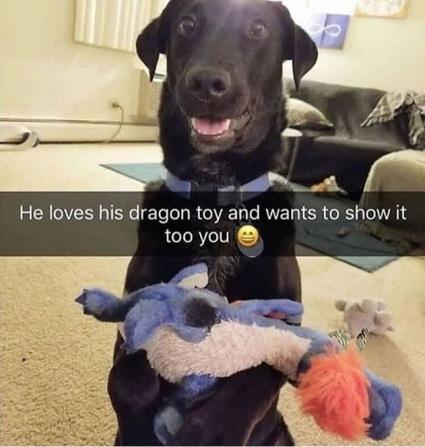 2019_12 17 DOG loves toy