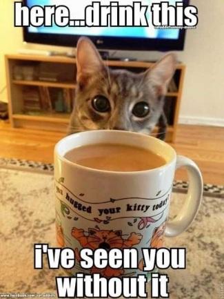 2019_12 20 coffee cat