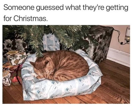 2019_12 23 CAT Christmas bed