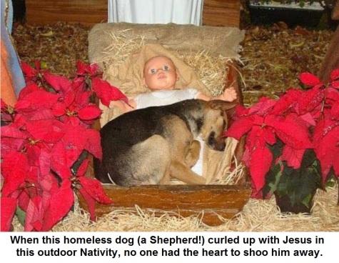 2019_12 23 DOG nativity