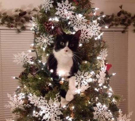2019_12 30 Cat in tree