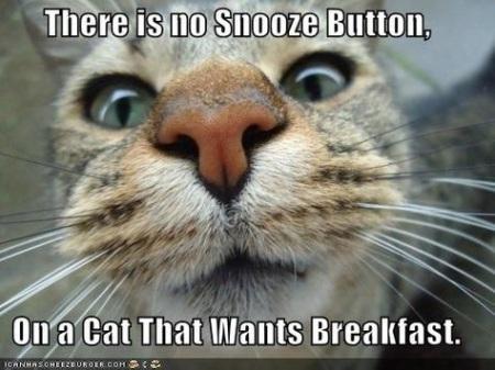 2020_01 12 CAT wants food