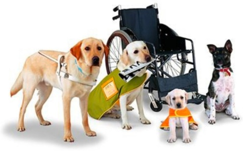 2020_01 20 service dog