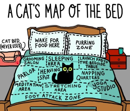 2020_01 25 CAT map of bed