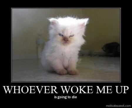 CAT whoever woke me