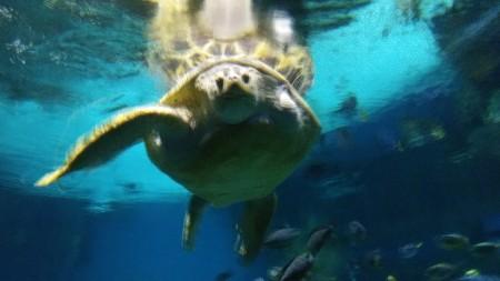 2020_01 30 Turtle says hi