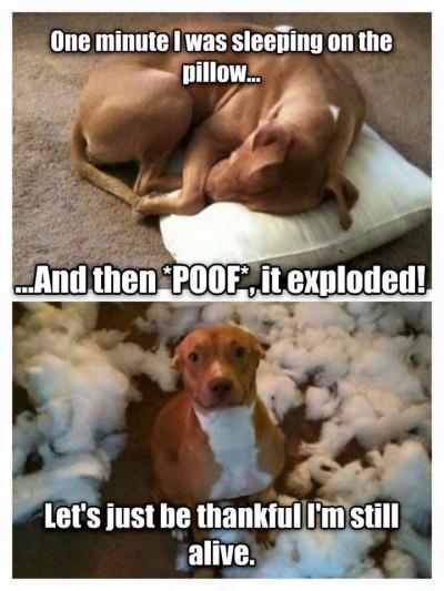 2020_02 21 DOG exploding pillow