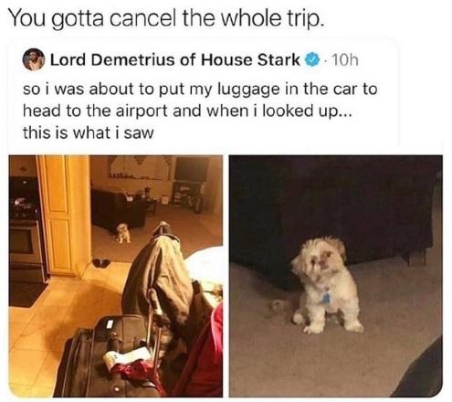 2020_03 06 DOG cancel trip