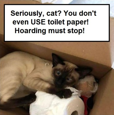 2020_03 15 cat hoarding