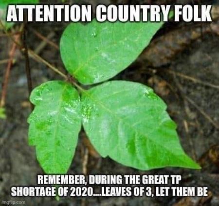 2020_03 17 tp poison ivy