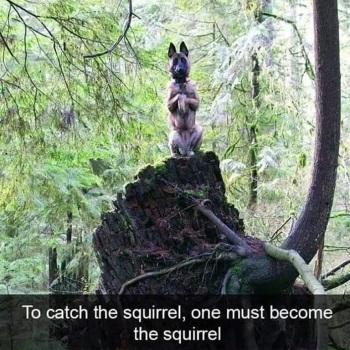 2020_03 19 DOG squirrel