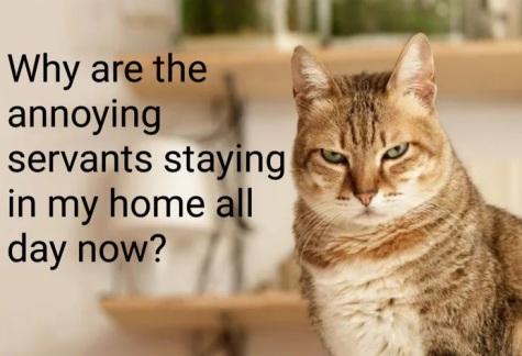 2020_03 22 cat annoying