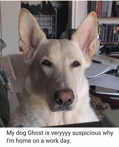 2020_03 26 dog suspicious