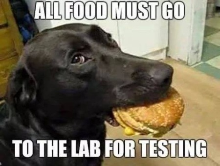 2020_04 13 DOG food to lab