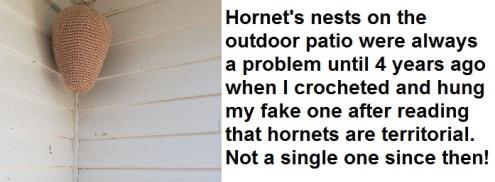 2020_04 24 Hornet's nest