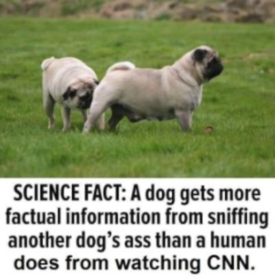 2020_04 27 Dog butts CNN