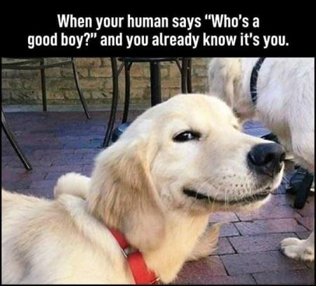 2020_05 02 dog good boy