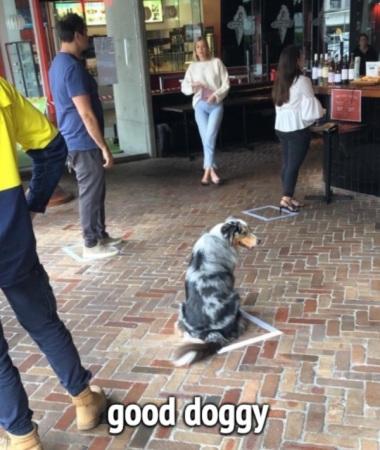 2020_05 05 good doggy