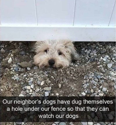 2020_05 11 DOG neighbor