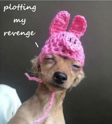 2020_05 18 DOG crochet pig hat