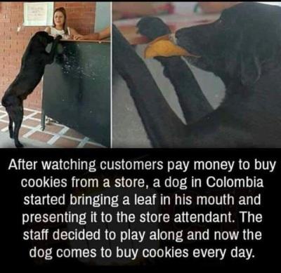 2020_05 31 DOG buys cookies