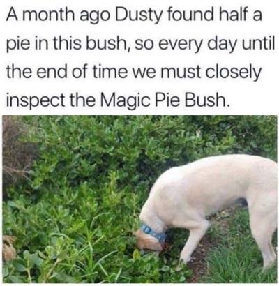 2020_06 16 DOG pie bush