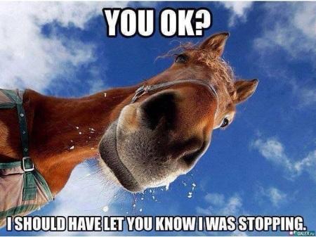 2020_07 20 HORSE You okay