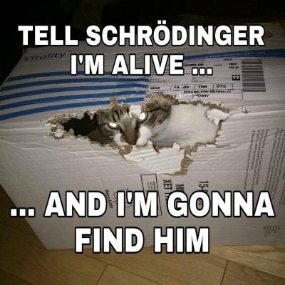 2020_08 07 schrodinger's cat