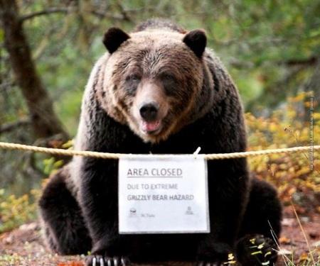 2020_08 14 bear