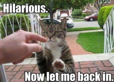 2020_08 25 CAT let me in