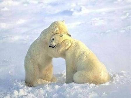 POLAR BEARS comfort hug